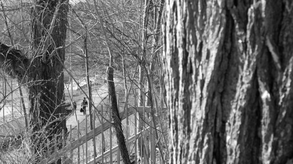 ID: Two people walking on a sidewalk, as seen through leafless trees and a light wrought iron railing.
