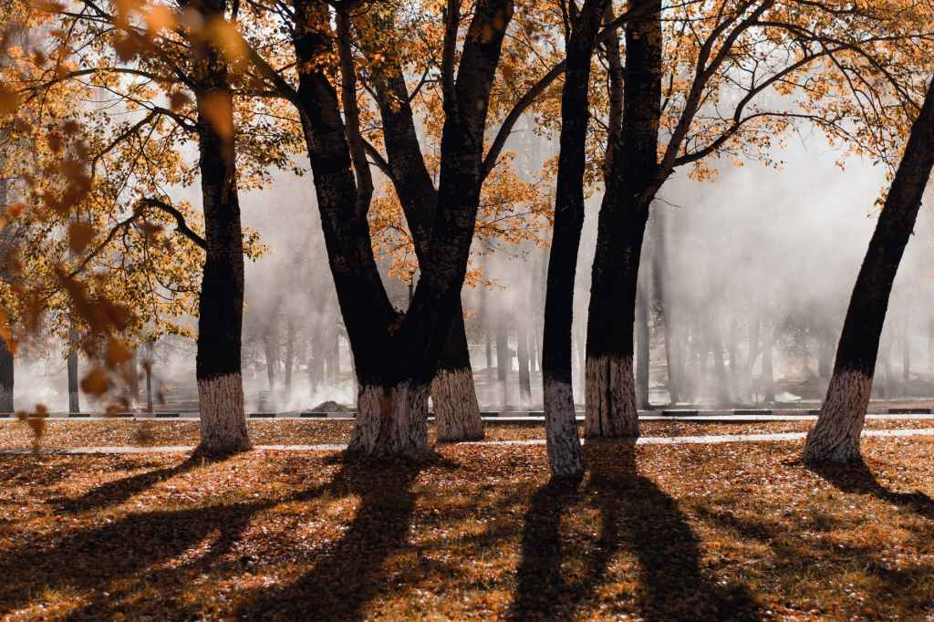 Photo of trees during autumn